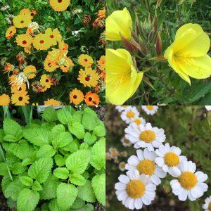 summer flowers for happy hormones