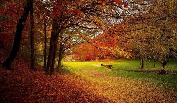 autumn cleanse