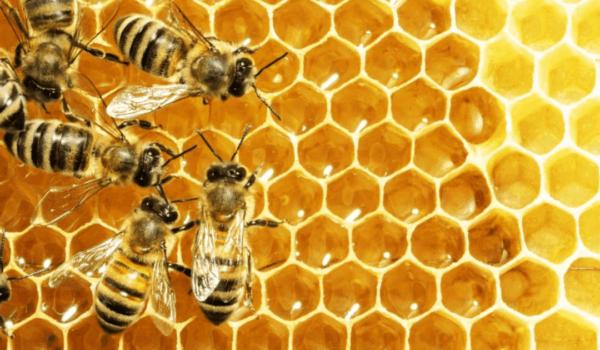 can bees help hormones